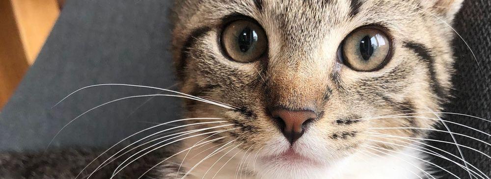 Hausbesuch Tierarzt Katze
