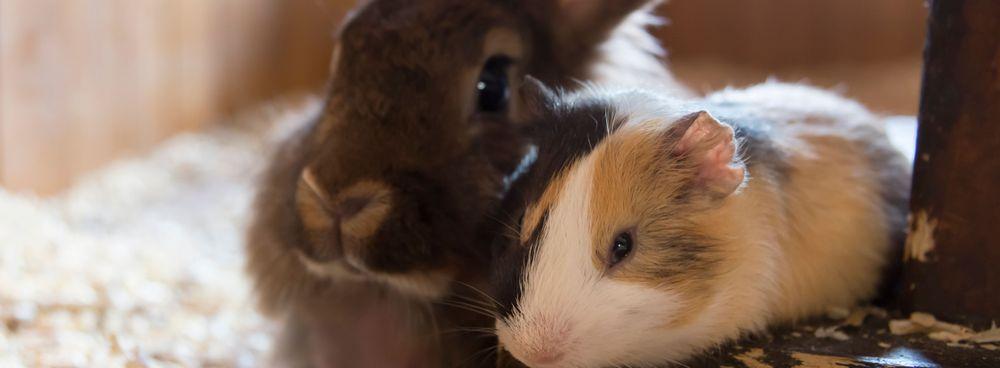 Kaninchen und Meerschweinchen im Außengehege Tierarzt Kleintierpraxis Cremlingen Braunschweig