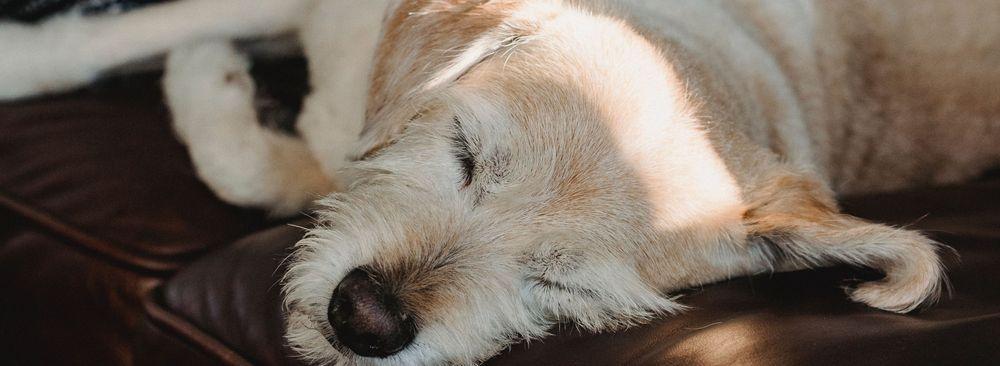Kastration Hund Katze Tierarzt Braunschweig Sterilisation Kastrationschip