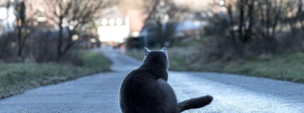 Tierbestattung Tod Tier Hund Katze Rosengarten
