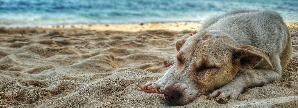 Reise Hund Vorbereitung Tipps Leishmaniose