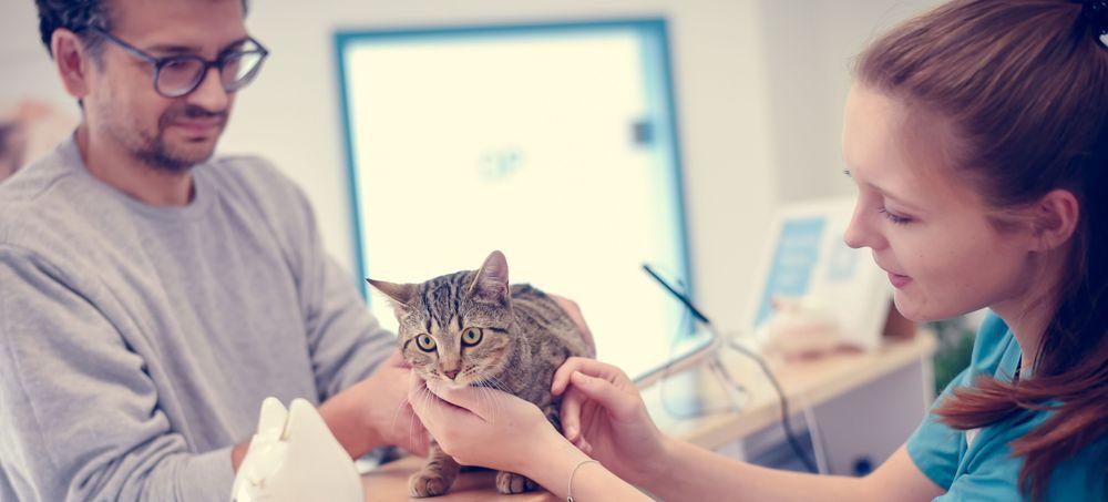 Tierarzt Braunschweig Katze Kunde Kleintierpraxis Cremlingen