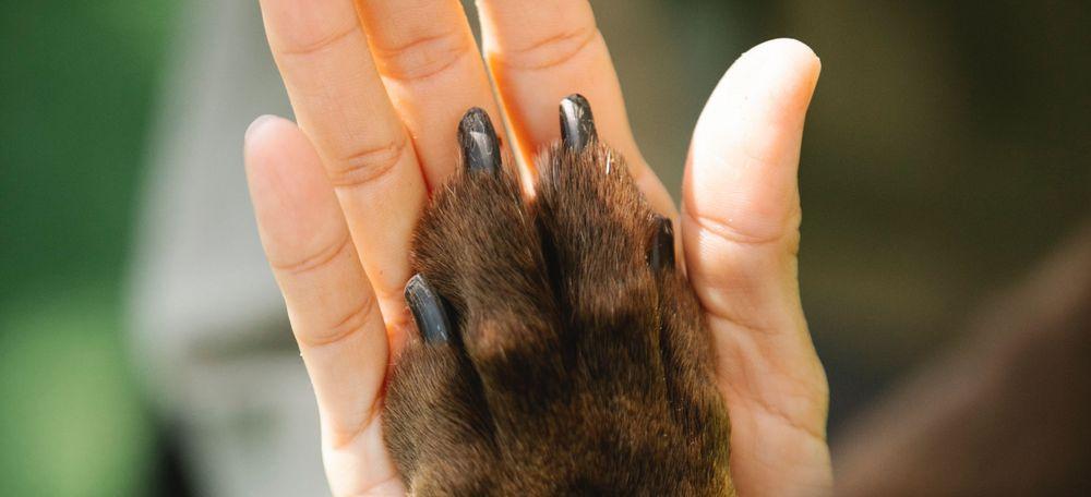Tierarzt Braunschweig Kunden zufrieden glücklich Häusler
