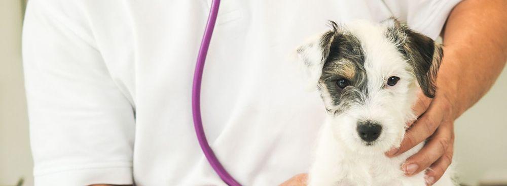 Welpe Beratung Gewichtsmanagemnt Impfung Impferinnerung Entwurmung Floh und Zeckenprohylaxe Gesundheitscheck Geriatrie Tierarztpraxis Tierarzt Kleintierpraxis Hund Katze Braunschweig Königslutter